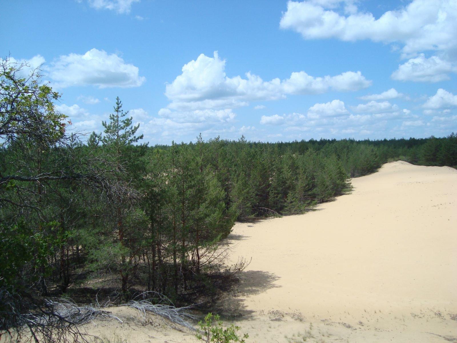 Закон о делянке леса владельцу земельного участка